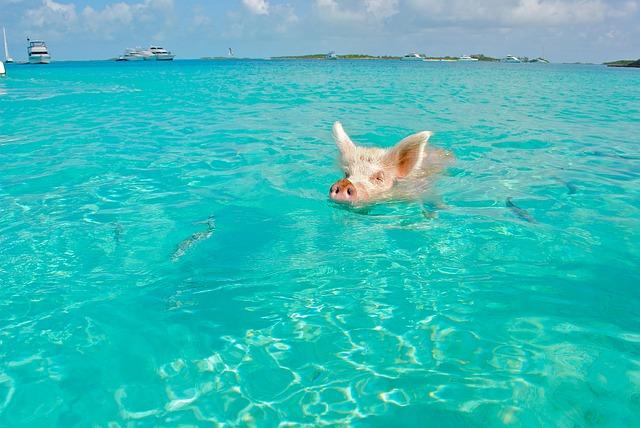 Bahami - Z letalom na poti